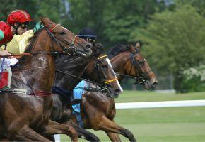 Horse Races Calendar 2016 UK and USA