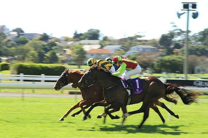 Guide and how to Bet on French horse races