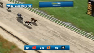 Virtual greyhound races from William Hill