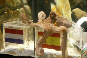 Without Paul the Octopus, the World Cup has become more difficult for punters
