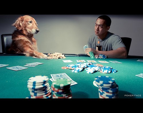 poker-face dog